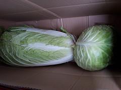 新鮮野菜 inたえまつ